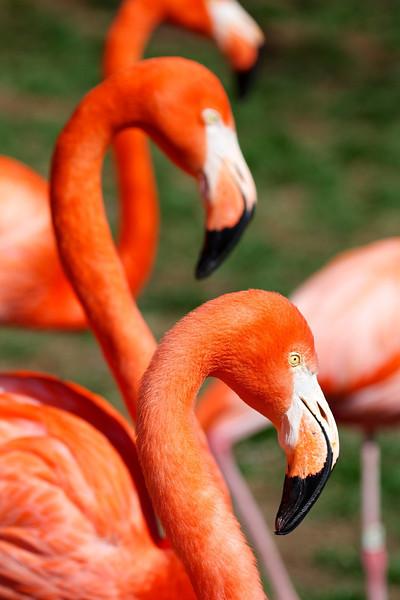 Obligatory flamingo shot