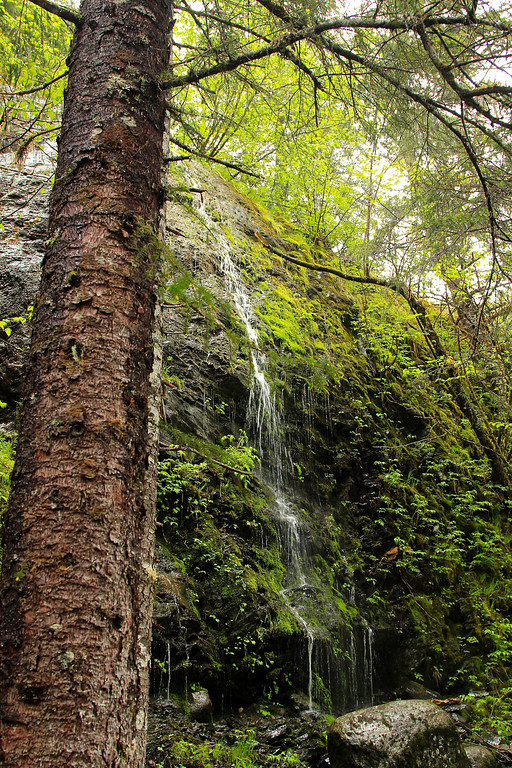 Rainforest near Mendenhall Glacier