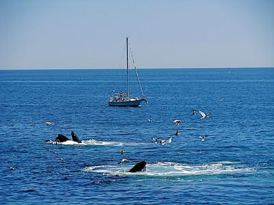 Whale-watching off Boston Massachusetts, May 2008