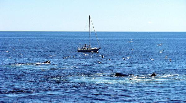 Boston whale-watching