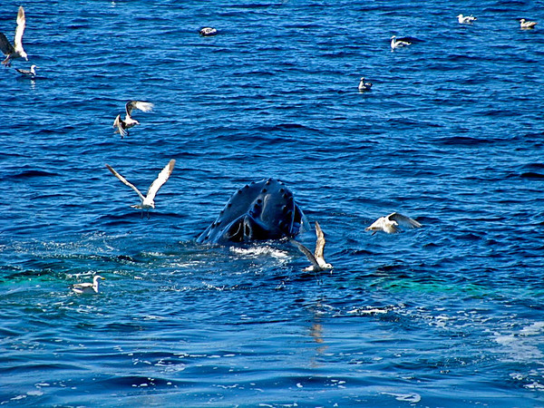 Whale-watching off Boston