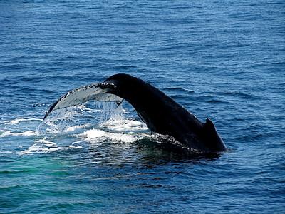 Whale-watching off Boston, Massachusetts May 2008