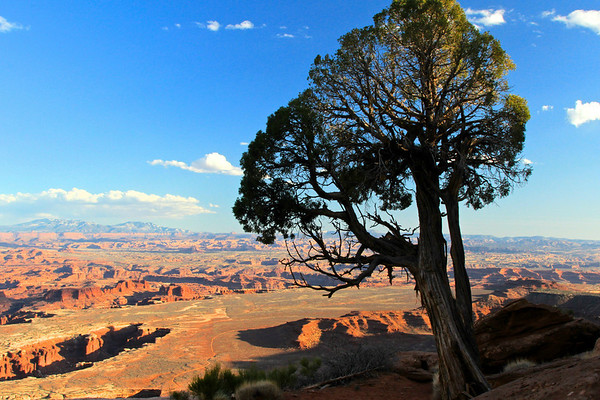 Canyonlands, late afternoon