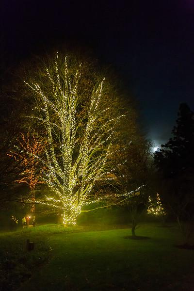 Christmas Eve, Longwood Gardens