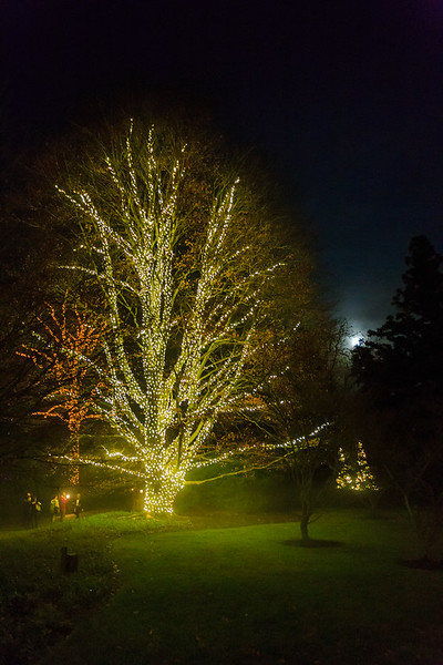 Christmas Eve, Longwood Gardens