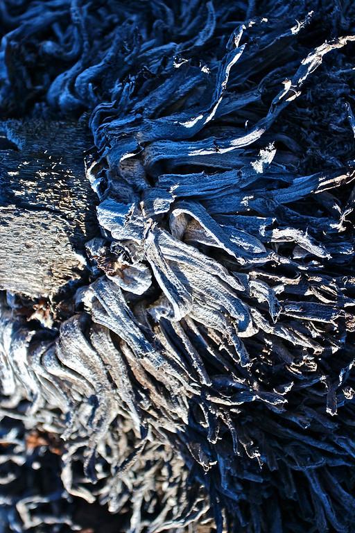 Damaged silversword