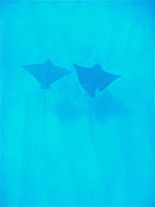 Snorkeling in Oahu