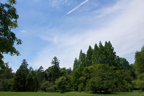 Morris Arboretum, June 2014