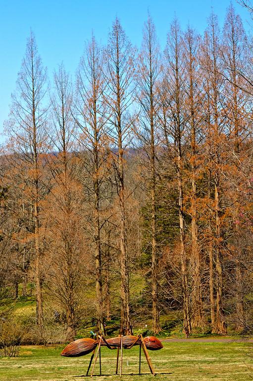 Morris Arboretum April 2013