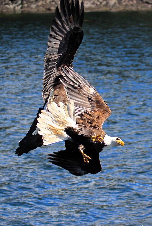 Giant Eagles fighting Nazgul.