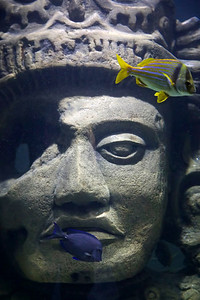 Audubon Aquarium of the Americas