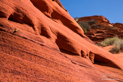 Lizard on steep, featured red sandstone rock face