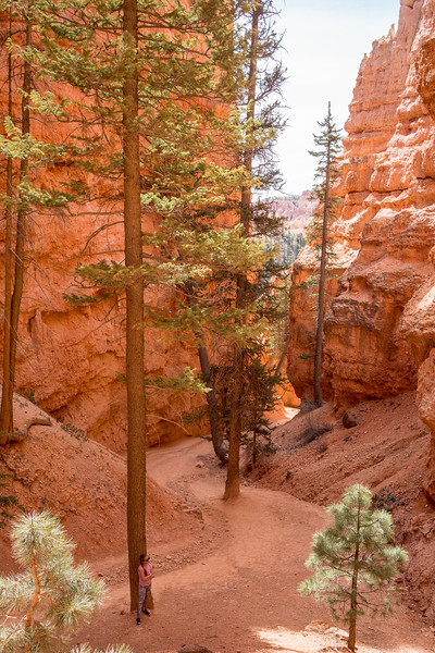 Queen's & Navaho Trails