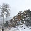 Aspen & Rocks