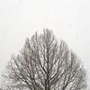 Snowfall & Tree