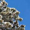 Tree, Snow, Sky