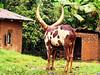 Uganda Rural Life