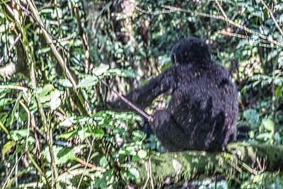 A juvenile mountain gorillai