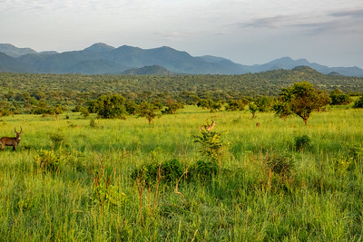 Kidepo Valley National Park in northeastern Uganda near the borders with Southern Sudan and Kenya