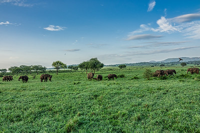 Herd of elephants showing the beauty of Kidepo