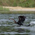 Ahinga fishing! Murchison Falls