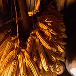 Dried maize, Karamajong village, Kidepo