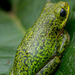 Frog blending in, QENP