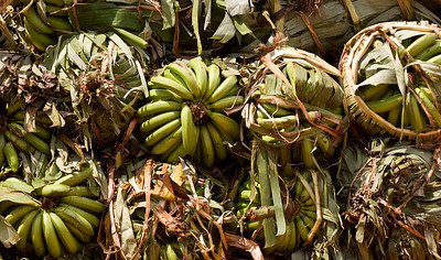 plantains in transport