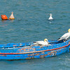 This unattended boat was commandeered by a pair of Northern Gannets for their nesting spot.