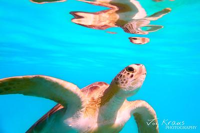 Underwater Reflection III