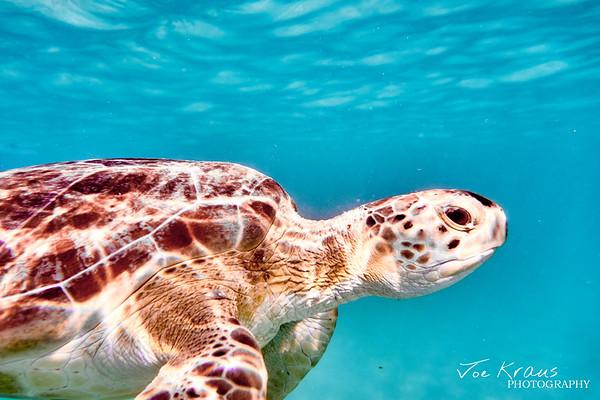 Profile of a Turtle