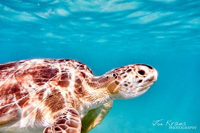 Profile of a Turtle II