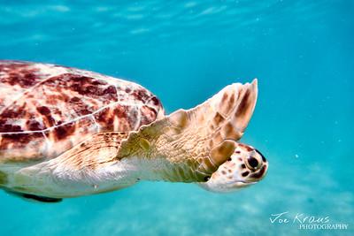 Sea Turtle Fin