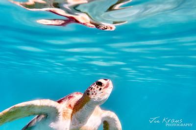 Suracing Turtle II