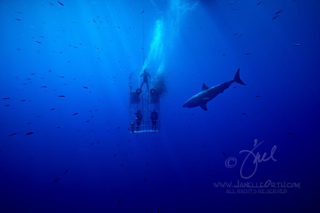 Fish Rush  ©2016  Janelle Orth