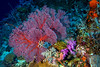 Coral Gardens ©2014 Janelle Orth