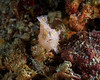 Frog Fish ©2020 Janelle Orth