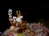 Squat Shrimp 1  ©2015 Janelle Orth