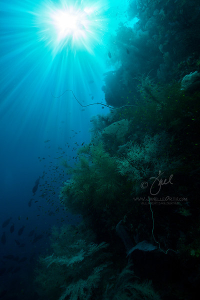 Sunburst Reef  ©2018  Janelle Orth
