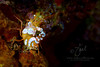 Squat Shrimp 2  ©2015 Janelle Orth