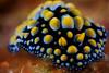 Nudibranch ©2015 Janelle Orth
