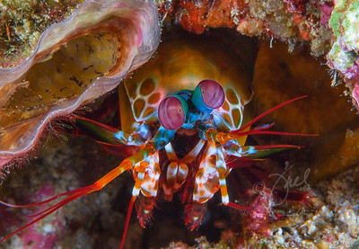 Mantis ©2014 Janelle Orth