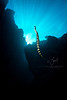 Black Banded Sea Krait  ©2017  Janelle Orth