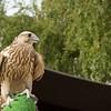 Red Orbit Falcon