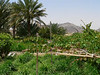 UAE - Hajjar Mountains - MaHDa oasis
