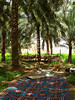 UAE - Hajjar Mountains - MaHDa oasis - palm trees