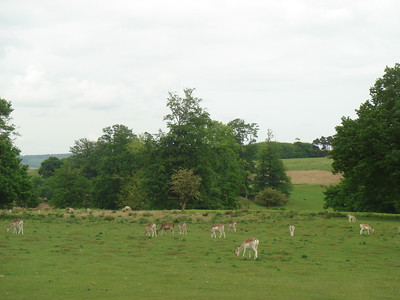 May 2007 - Knole Park, Sevenoaks