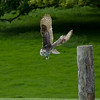 Duncombe International Raptor Center, Helmsley