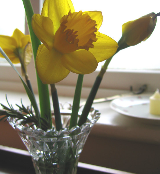 The first week of March, the daffodills were about the only thing blooming yet, but they were everywhere brightening up the otherwise dreary environment.