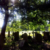 Brompton Cemetery: shady grove on a summer's afternoon.